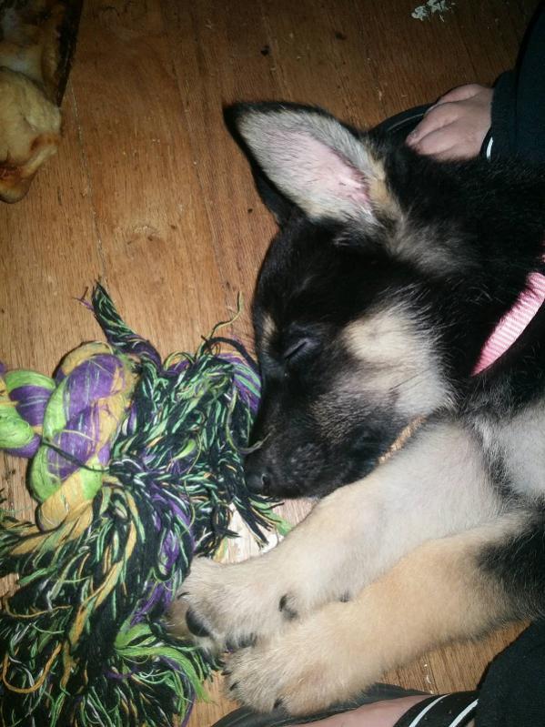 New Rescue Pup-della3.jpg