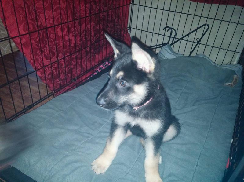 New Rescue Pup-della4.jpg