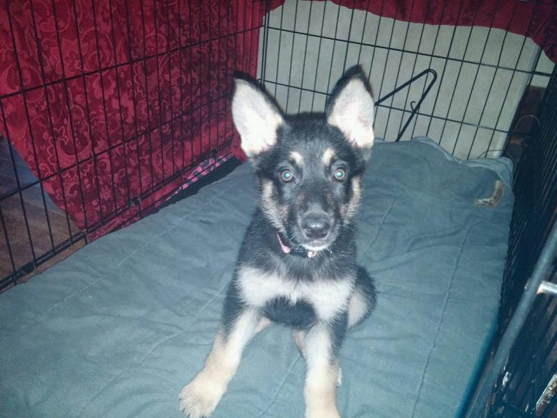 New Rescue Pup-della5.jpg