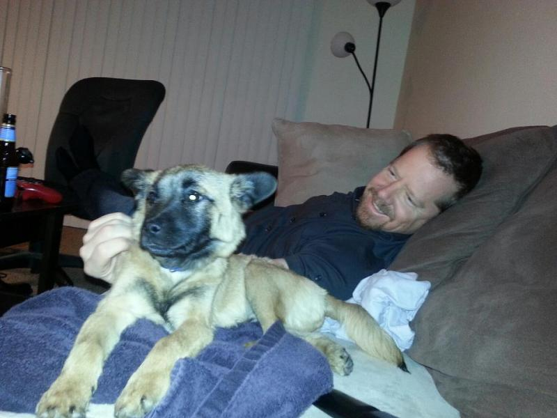 Is this a German Shepherd or a Belgian Malinois?-dexter_8.jpg