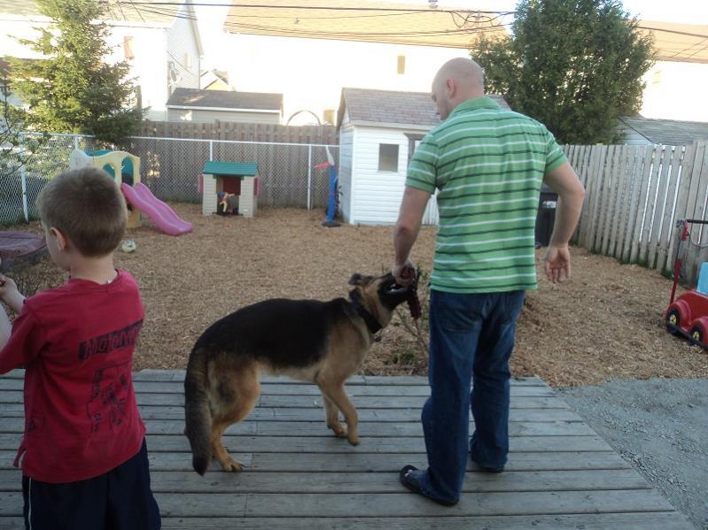 Click Image For Larger Version Name Dog3 Jpg Views 1694 Size 83 1