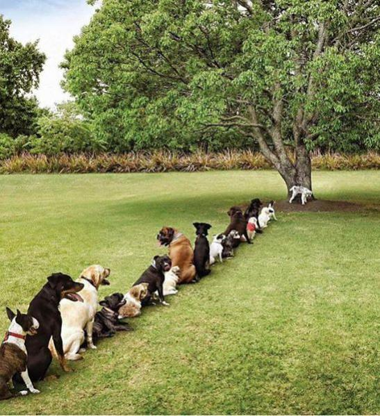In Queue for the Loo...-doggie-urinal.jpg