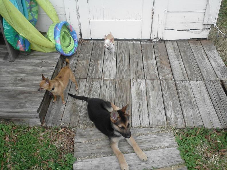 Axel-dogs.jpg