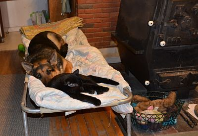 Show me your dog 39 s bed german shepherd dog forums - Show me pictures of bunk beds ...