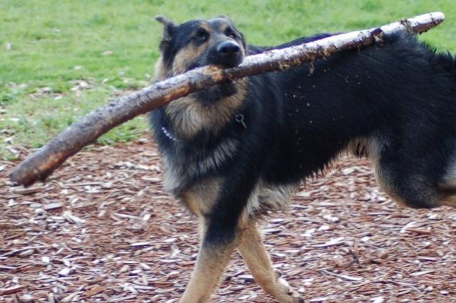 Does your GSD do this?-dsc_0048-640x426-.jpg