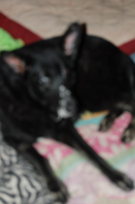Baltimore/DC Metro Sweet Senior Sisters Need Foster Home or Permenant Placmt -adopted-dsc_0131.jpg