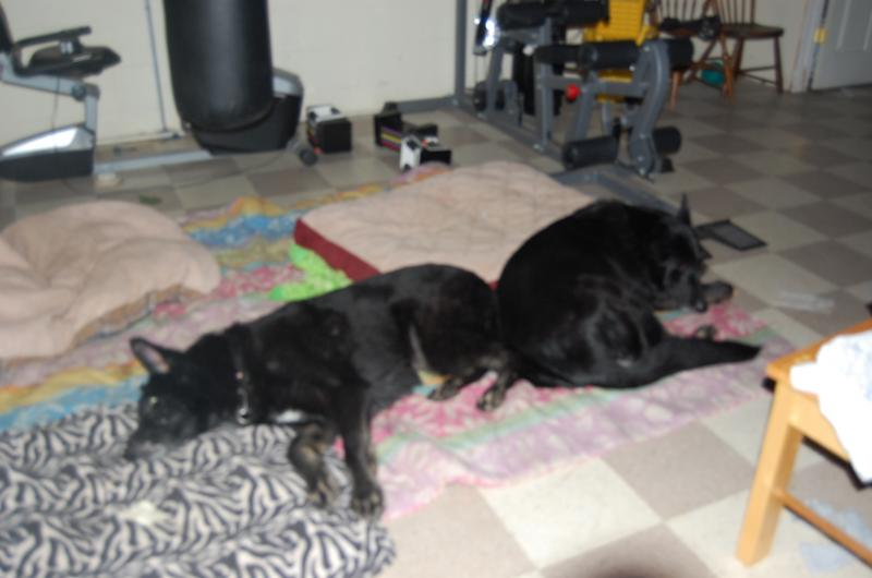 Baltimore/DC Metro Sweet Senior Sisters Need Foster Home or Permenant Placmt -adopted-dsc_0145.jpg