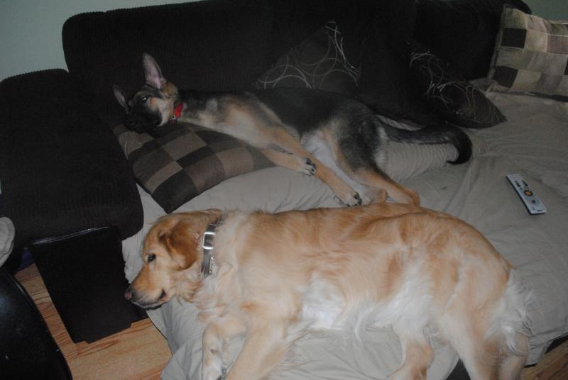 Let's all take a nap <3-dsc_0642.jpg