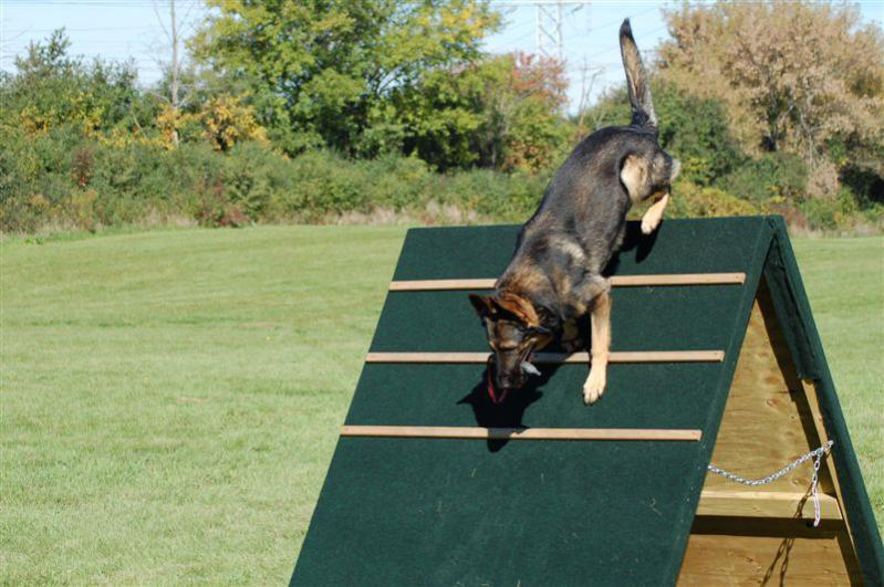 Dog Agility Used Equipment For Sale