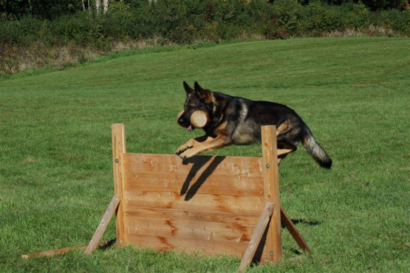 Schutzhund Agility Dog Training Equipment Aurora Il