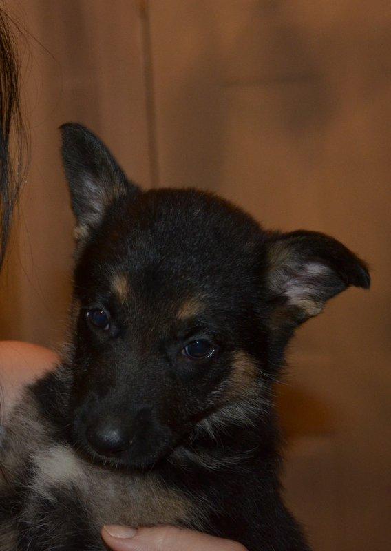 New puppy-dsc_7562-2-.jpg