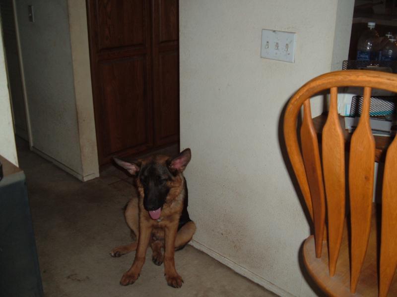 sad puppy?:(-dscf0587.jpg