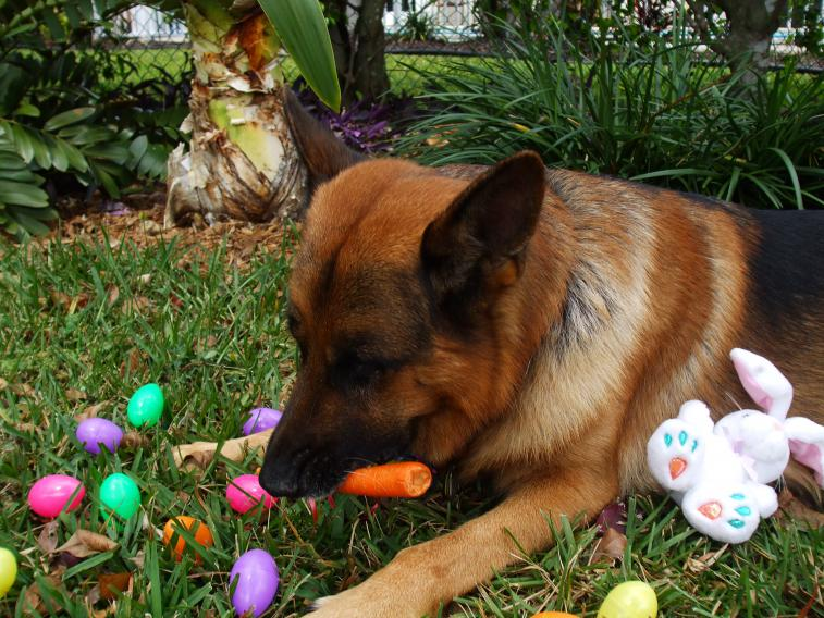 Maxx's first Easter!!-dscf1346.jpg