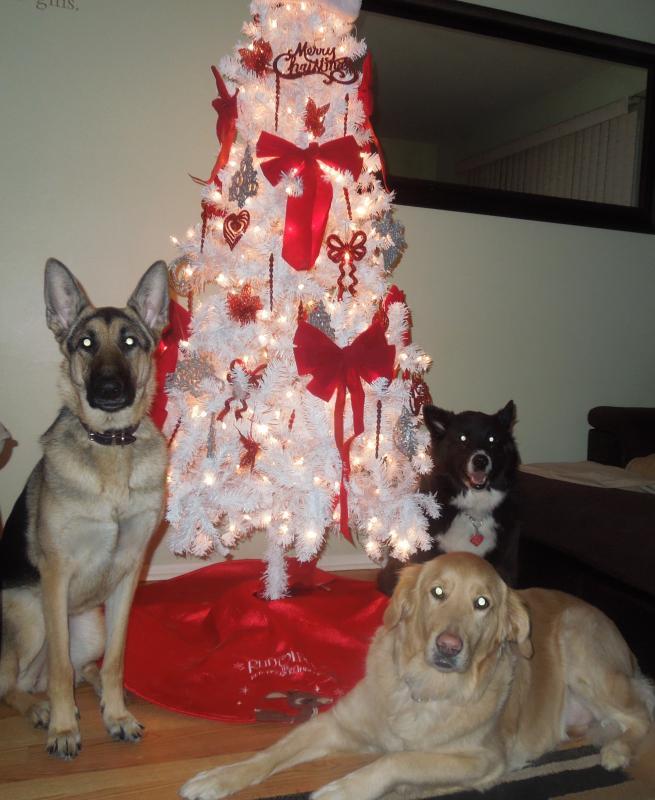 Merry Christmas!!-dscn0158_2.jpg