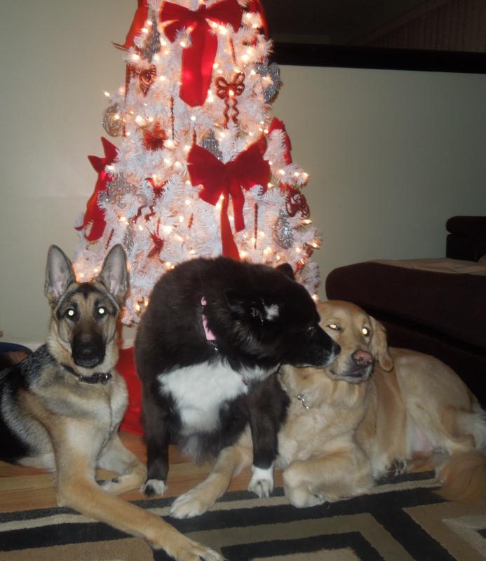 Merry Christmas!!-dscn0161_2.jpg