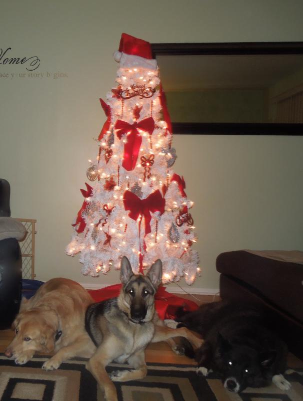 Merry Christmas!!-dscn0170_2.jpg