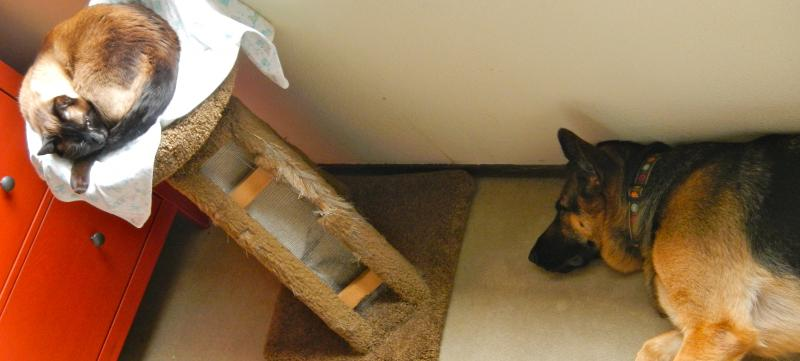 How does your dog react when you vacuum?-dscn0735.jpg