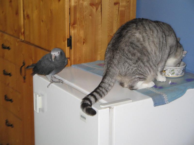 Give me the bird!!!!-echo-london.jpg