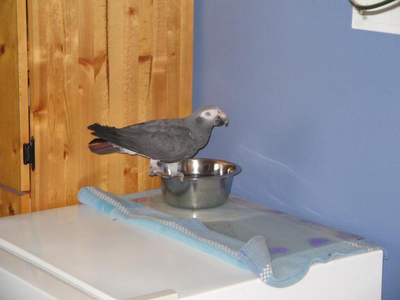 Give me the bird!!!!-echo-london2.jpg