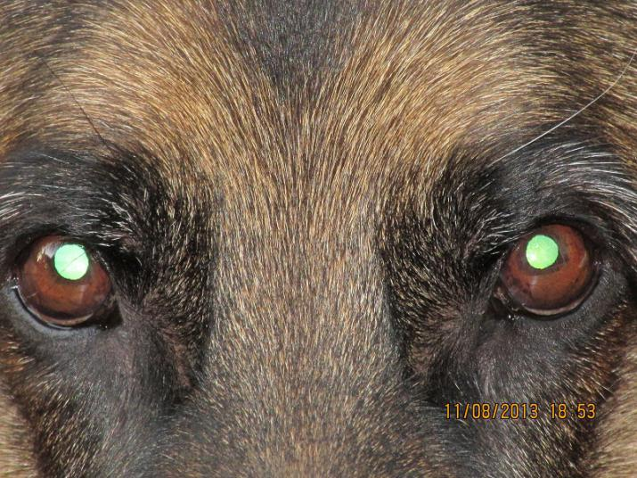Let's See Those EYES-eich-eyes-close-up2.jpg