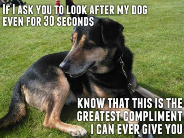 Funny GSD memes - Page 4 - German Shepherd Dog Forums