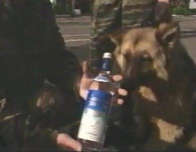 Russian Police K-9 Training...-finding-vodka.jpg