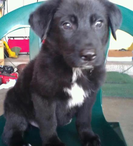 My German Shepherd Mix German Shepherd Dog Forums
