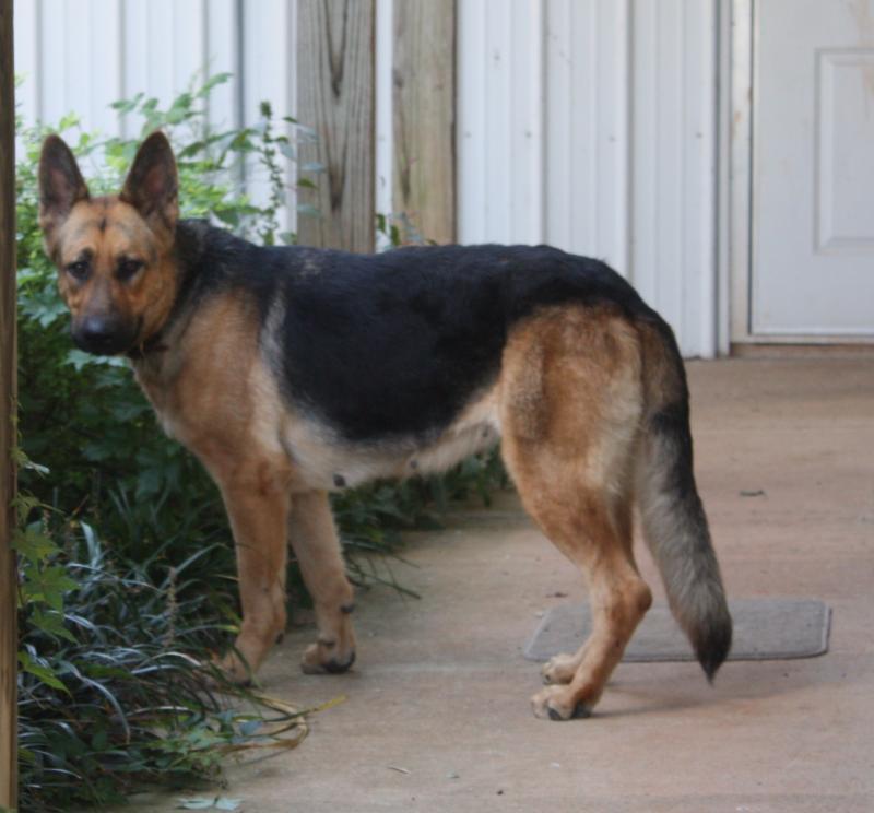 Gainesville Dog Adoption