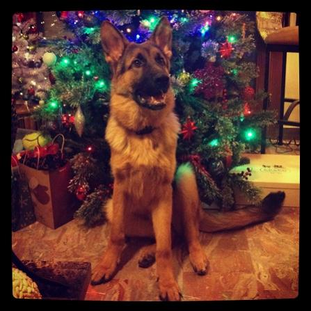 Thor's first christmas picture-gsdf.jpg