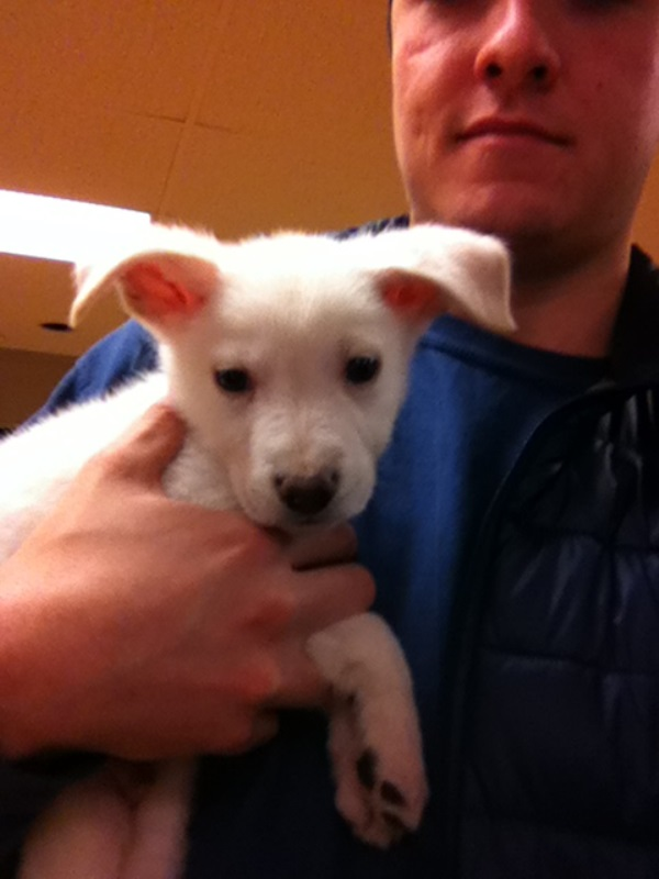 I'm getting my new puppy tomorrow!-hans-shelter.jpg