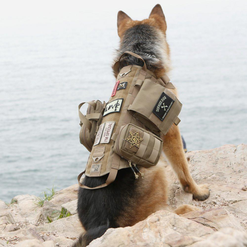 Tactical Training Dogs