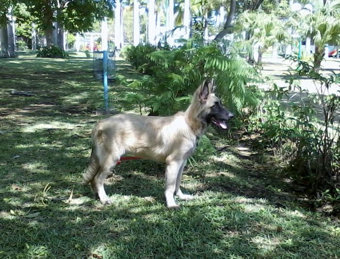 What will be its adult coat color ?-hector-5-months.jpg
