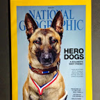 Hero Dogs National Geographic June 2014-hero-dogs.jpg