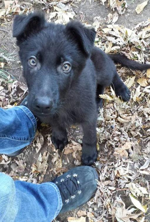 Beth here with Jack - my Black GSD-hi.jpg