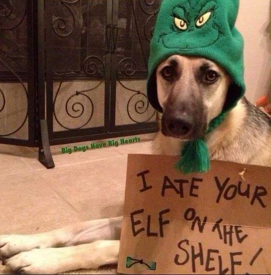 I Ate Your Elf on a Shelf!-i-ate-your-elf.jpg