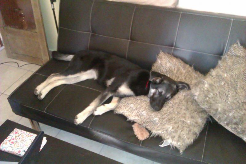 Adopted GSD-imag0028.jpg