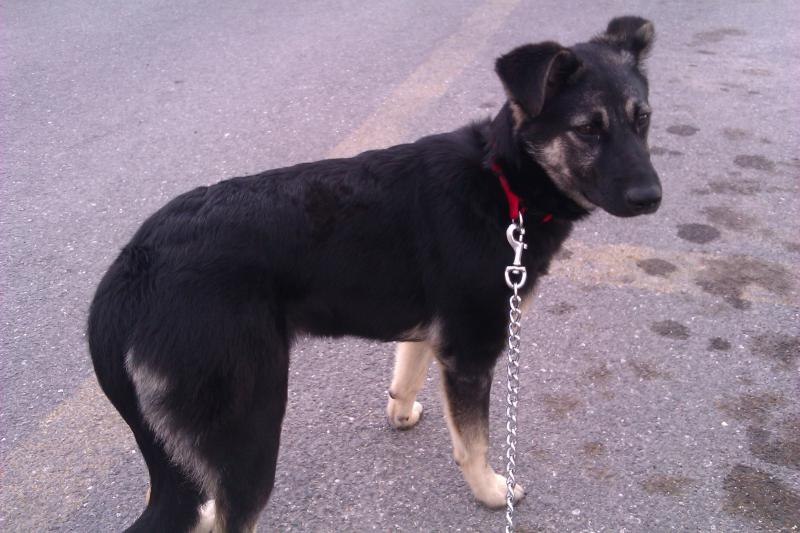 Adopted GSD-imag0047.jpg