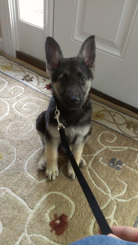 Meet Tiberius-10 weeks :)-imag0378.jpg