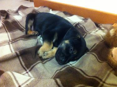 Murphy: Rescue puppy overload-image-1-.jpg