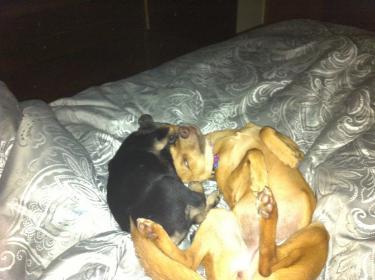 Murphy: Rescue puppy overload-image-2-.jpg