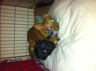 Murphy: Rescue puppy overload-image-5-.jpg