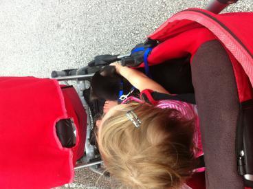 Murphy: Rescue puppy overload-image-6-.jpg