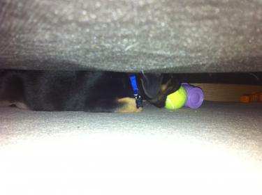 Murphy: Rescue puppy overload-image-7-.jpg