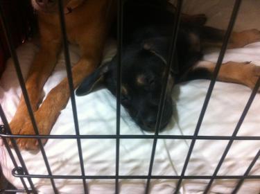 Murphy: Rescue puppy overload-image-8-.jpg