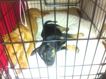 Murphy: Rescue puppy overload-image-9-.jpg