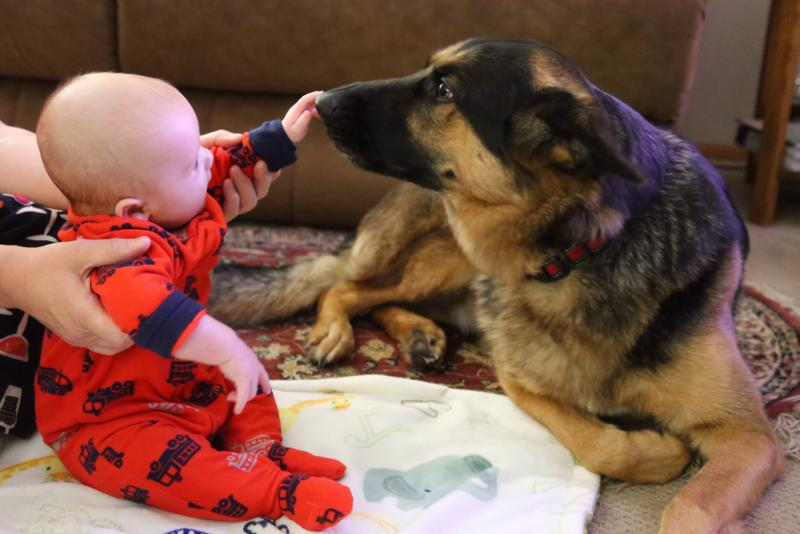 My boys (GSD with our 4 month old)-image.jpg