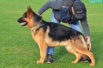 Puppy Agnes 3 weeks to 10 wks EARS!-image.jpg