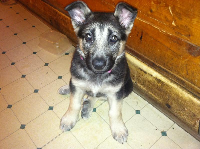 My puppy Kimber-image.jpg