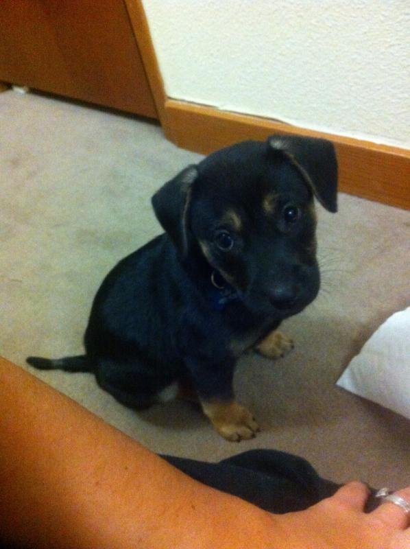 Murphy: Rescue puppy overload-image.jpg