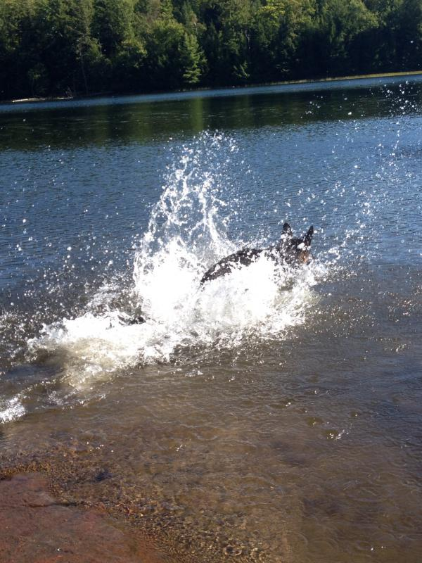 SHOW ME...Your GSD`S in water-image.jpg